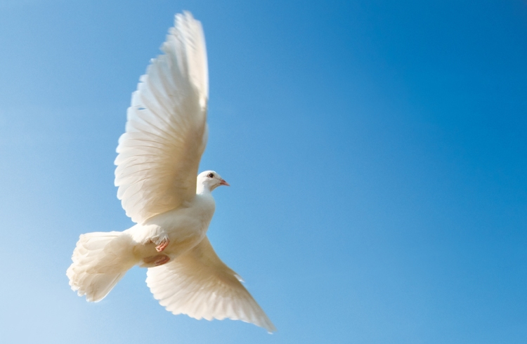 white-dove-in-cloudless-skies_994x650