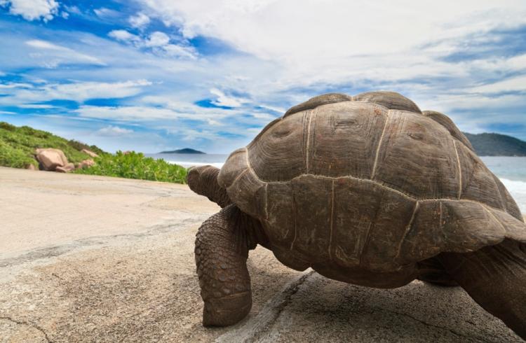 giant-tortoise_994x650