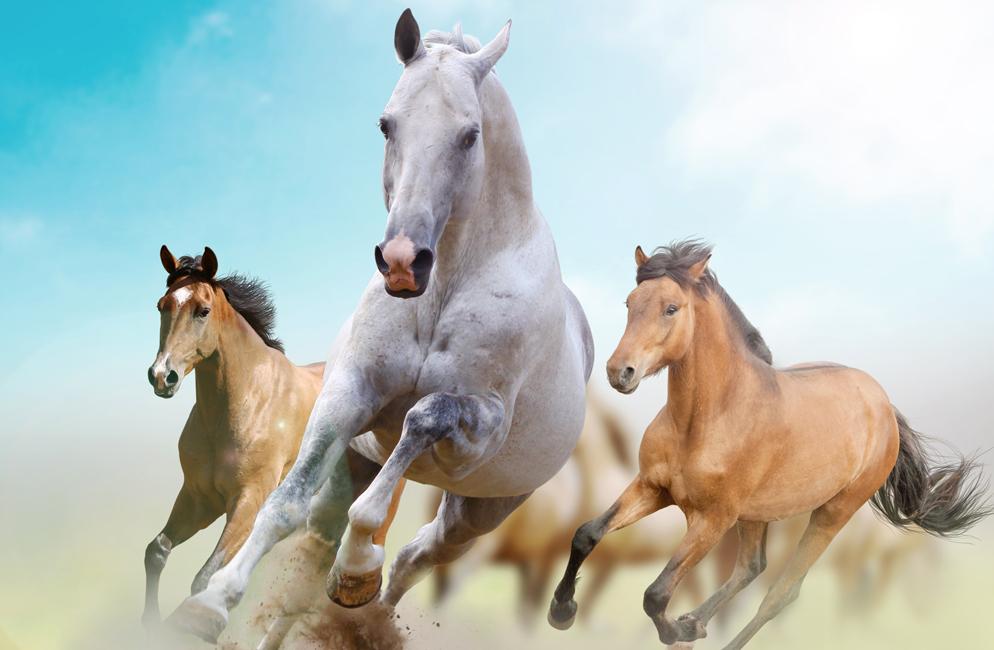 wild-horses_994x650